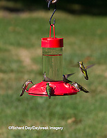 01162-12902 Ruby-throated Hummingbirds (Archilochus colubris) at Dr. JB's Hummingbird Feeder, Marion County, IL