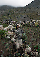Arhuaco man working the onion plantation. Sierra Nevada de Santa Marta, Colombia.