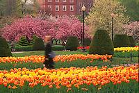 Public Garden tulip blur springtime Boston, MA
