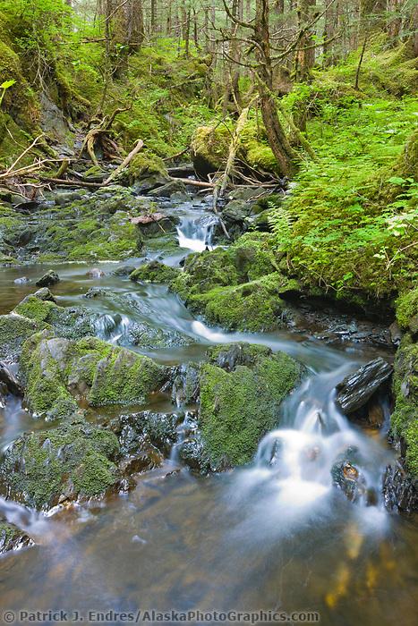 Forest stream, Chugach National Forest, southcentral, Alaska.