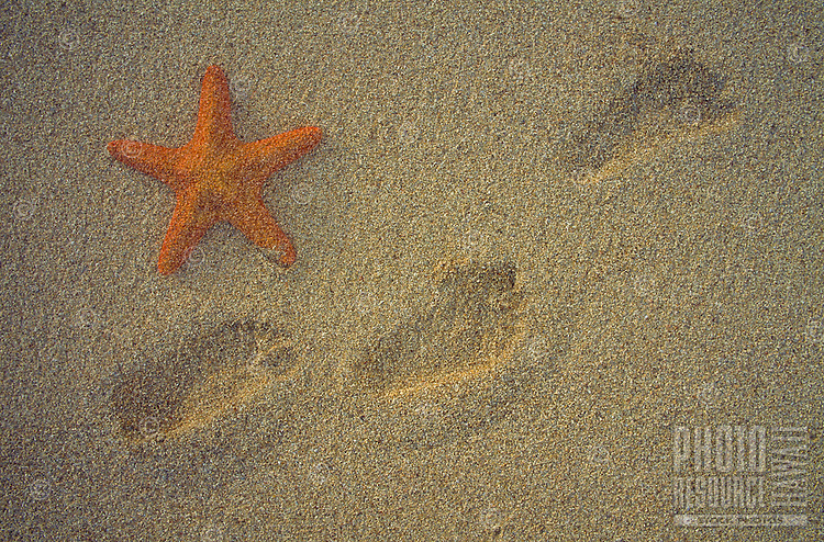 A starfish rests on the sand next to footprints.