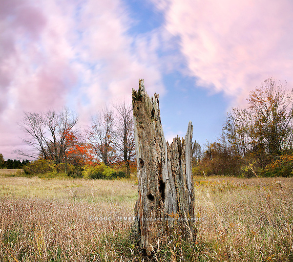 Meadow And Old Stump In Autumn, Near Point Betsie Michigan, USA