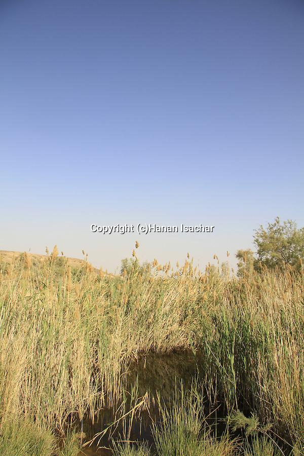 Israel, Negev, Ein Zach near Hatzeva