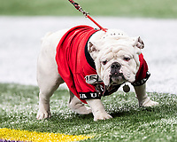 ATLANTA, GA - DECEMBER 7: Uga X mascot of the University of Georgia during a game between Georgia Bulldogs and LSU Tigers at Mercedes Benz Stadium on December 7, 2019 in Atlanta, Georgia.