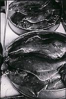Europe/France/Normandie/Haute-Normandie/76/Seine-Maritime/Dieppe: Chez le poissonnier - Sole sur l'étal