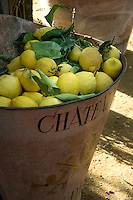 Freshly picked lemons in an old metal grape bin from a French chateau