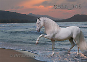 Bob, ANIMALS, collage, horses, photos(GBLA745,#A#) Pferde, caballos