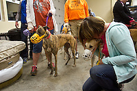 Donna Gonder comforts a greyhound who has just arrived.