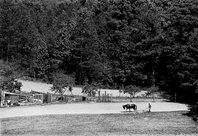 A man plows his field with his mule. Noxapater, Miss., 1978.