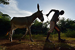 Lovius Joseph pulls a donkey in Picmy, a village on the Haitian island of La Gonave, where Service Chr&eacute;tien d&rsquo;Ha&iuml;ti is working with survivors of Hurricane Matthew, which struck the region in 2016. SCH is a member of the ACT Alliance. <br /> <br /> Donkeys are an important part of SCH's emergency response on La Gonave. They provide families with transportation along rocky hillsides, helping them get their agricultural harvest to market and helping women carry water long distances.