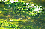 work shop 09 water grass flow under water with motion green yellow movement abstract fine art