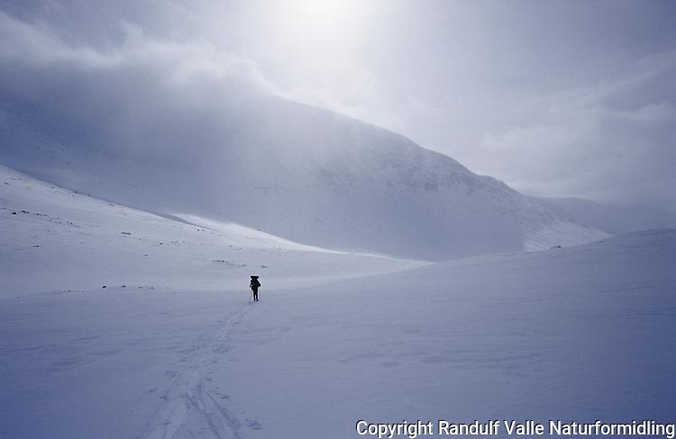 Enslig skiløper i Sarek. ---- Lone skier in Sarek.
