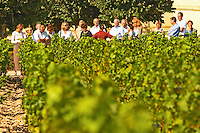 A group of tourists visiting the vineyard and winery  - Chateau Baron Pichon Longueville, Pauillac, Medoc, Bordeaux, Grand Cru