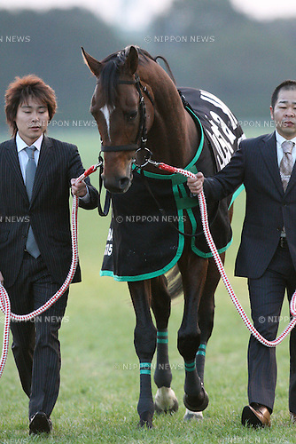Just a Way,<br /> JANUARY 4, 2015 - Horse Racing :<br /> Just a Way during his retirement ceremony at Kyoto Racecourse in Kyoto, Japan. (Photo by Eiichi Yamane/AFLO)