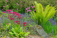 Summer Garden with Japanese Primrose, Ajuga and Columbine