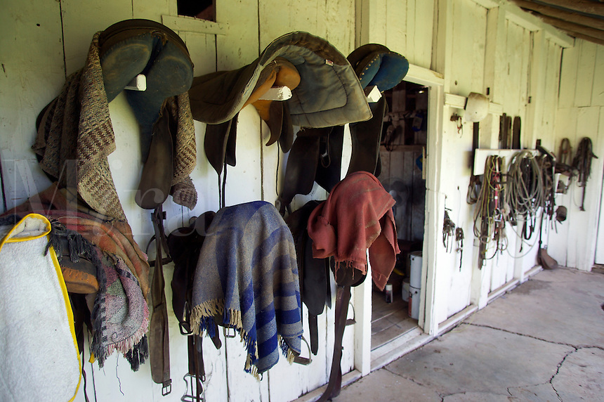 saddles on cattle ranch australia