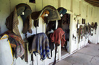 saddles on cattle ranch australia
