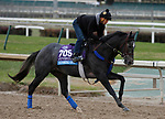 October 30, 2018 : Gunmetal Gray in preparation for the Breeders' Cup on November 01, 2018 in Louisville, KY.  Candice Chavez/ESW/CSM
