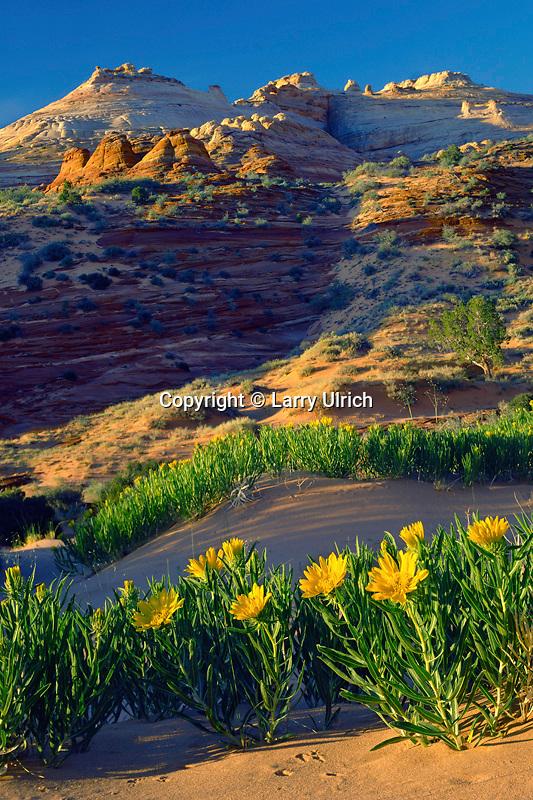 Rough mule's ears<br /> Paria Canyon-Vermilion Cliffs Wilderness<br /> Colorado Plateau<br /> Utah