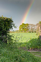 Rainbow over fields with gateway leading into a cereal field in spring, Wetheral, Cumbria.....Copyright..John Eveson,.Dinkling Green Farm,.Whitewell,.Clitheroe,.Lancashire..BB7 3BN.Tel. 01995 61280.Mobile 07973 482705.j.r.eveson@btinternet.com.www.johneveson.com