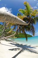 Palm trees at Maho Bay.Virgin Islands National Park.St. John, U.S. Virgin Islands