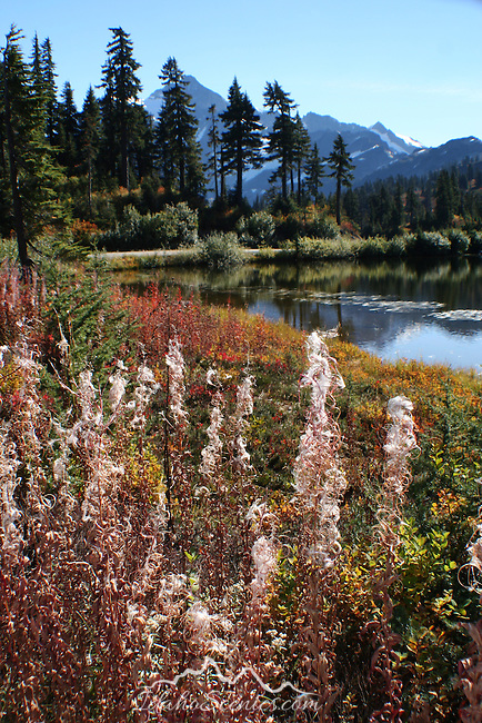 Fall Foilage North Cascade Range
