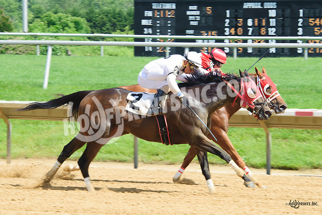 Duchess of Wicklow winning at Delaware Park on 6/6/16