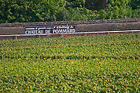 Vineyard. Chateau de Pommard sign. Pommard, Cote de Beaune, d'Or, Burgundy, France