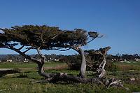 CARMEL - APR 29: 17 mile drive in Carmel, California on April 29, 2011.