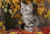 Carl, ANIMALS, photos(SWLA3725,#A#) Katzen, gatos