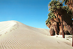 Sand dune oasis with palm trees California, California, West Coast of US, Golden State, 31st State, California, CA, Calif, Calf,Calaforna, Calafornia, Cali, Fine Art Photography by Ron Bennett, Fine Art, Fine Art photography, Art Photography, Copyright RonBennettPhotography.com ©