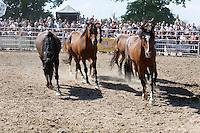 Autres images du rodéo de Bain-de-Bretagne Lâcher des chevaux sauvages utilisaient durant le rodéo
