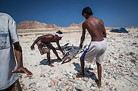 Fishermen handling the shark they captured in Ras Irsel, the deserted easternmost point of the island. Fishing from small boats has been traditionally the primary occupations of the people of Socotra along the coasts. The waters of the island are crammed with all kinds of fish and some rare species, like the Acropora palifera and Rhincodon, only found on Socotra.
