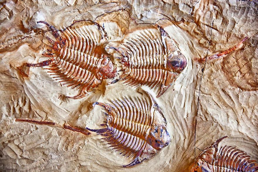 Fosili - Page 5 Morocco-photo-tour-3-9