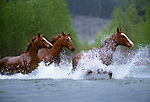 Open range horses, Methow Valley, Washington