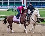 LOUISVILLE, KENTUCKY - APRIL 28: Street Band, trained by Larry Jones, exercises in preparation for the Kentucky Oaks at Churchill Downs in Louisville, Kentucky on April 28, 2019. Scott Serio/Eclipse Sportswire/CSM