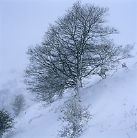 The bare branches of this tree form a delicate filligree against the snow