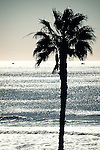The silhouette of a palm tree stands against the light on the ocean shore.