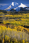 Aspen trees show their fall colors below the snowy peaks of the La Sal Mountains in Manti-La Sal National Forest, Utah.