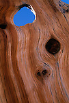 Knots and knotholes form shapes in tree trunk, Pike Nat'l Forest, CO