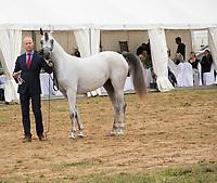 Rejawi Lembarak Arabian Horse, at the Prague Intercup - International Arabian Horse Show 2017 with handler.