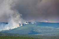 Columns of smoke rise from the boreal forest of spruce and hardwood trees in interior Alaska, as the Hastings forest fire north of Fairbanks increases its reach beyond 12,000 acres on June 7, 2011.