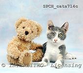 Xavier, ANIMALS, cats, photos, SPCHCATS714C,#A# Katzen, gatos