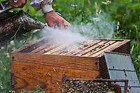 Europe/France/Pays de la Loire/44/Loire rope/France/Pays de la Loire/44/Loire-Atlantique/Parc Naturel Régional de Brière: Nicolas Roux Apiculteur, Miel du Rucher des Marais //   France, Loire Atlantique, Parc Naturel Regional de Briere (Regional Natural Park of Briere), Nicolas Roux Beekeeper, Apiary Honey of the Marshes