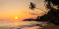 Mirissa Beach, panoramic photo of a palm tree at sunset, South Coast of Sri Lanka, Southern Province, Asia. This panoramic photo, taken at Mirissa Beach, Sri Lanka shows the silhouette of a palm tree at sunset. Mirissa Beach, a popular palm tree lined sandy beach on the South Coast of Sri Lanka is often blessed with a beautiful sunset.