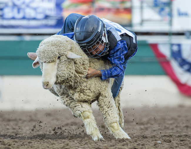 Mutton Busting during the Reno Rodeo on Sunday, June 23, 2019.
