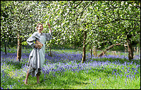 BNPS.co.uk (01202 558833)<br /> Pic: Phil Yeomans/BNPS<br /> <br /> Something to write about...<br /> <br /> The beautiful orchard at author Thomas Hardy's childhood home at Higher Bockhampton in the heart of Dorset is a blaze of glorious colour this spring.<br /> <br /> Due to the bizarre weather it has been blessed with the rare spectacle of bluebells and apple blossom flowering at the same time -giving NT manager Rachael Raine the perfect spot to brush up on the literary greats famous novels in the bucolic surroundings he would have found familiar.<br /> <br /> Hardy&rsquo;s father maintained the orchard at the cottage where they grew apples for cider-making and eating. Over 100 years later the orchard is still used to grow a number of different apple varieties that can be harvested at the end of the summer.
