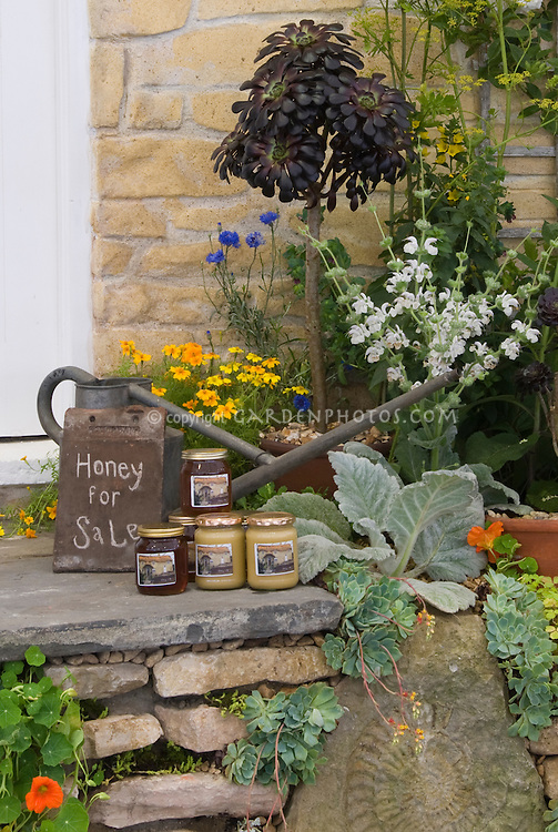 Honey from bees for sale   Plant & Flower Stock ...