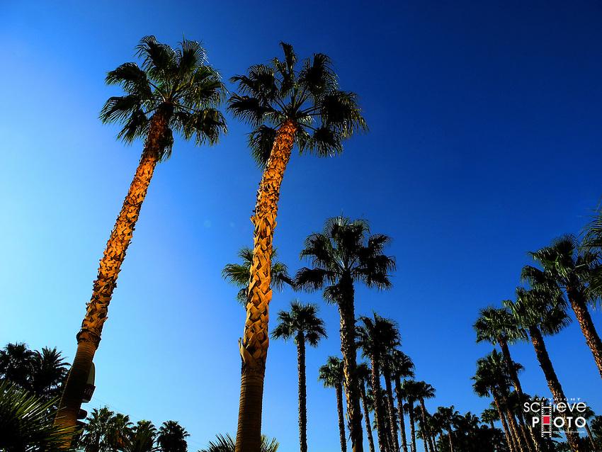 Palm trees in Las Vegas, Nevada.