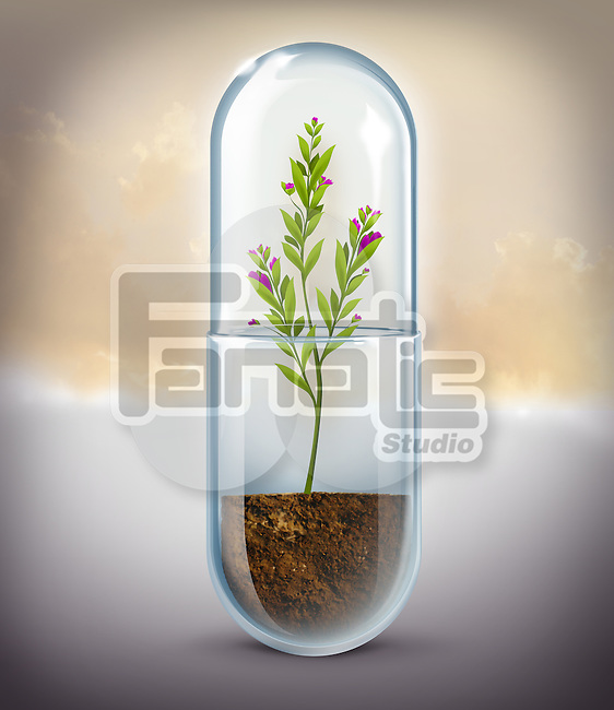 Illustrative image of plant growing in capsule representing natural medicine